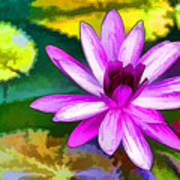 Pink Lotus Gallery  Art Print