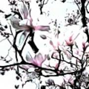 Pink Magnolia - In Black And White  Art Print