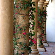 Pink Peacock Colored Bougainvillea Blossoms Climbing Pillars Photograph By Colleen Art Print