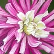 Pink Petal Blast Art Print