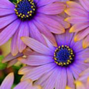 Pink Petals And Blue Buttons Art Print by Julie Palencia