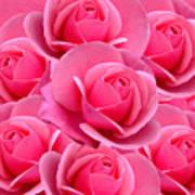 Pink Pink Roses Art Print