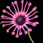Pink Pinwheel Art Print