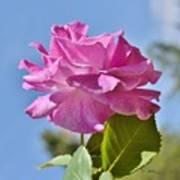 Pink Rose Against Blue Sky I Art Print