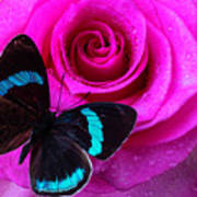 Pink Rose And Black Blue Butterfly Art Print