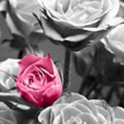 Pink Rose Art Print by Blink Images