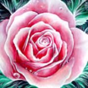Pink Rose Flower Art Print