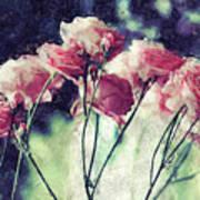 Pink Rose Flowers Art Print