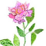 Pink Rose, Painting Art Print