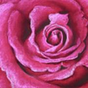 Pink Rose Pastel Painting Art Print