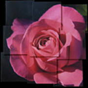Pink Rose Photo Sculpture Art Print