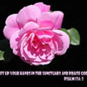 Pink Rose Psalm 134 Vs 2 Art Print