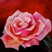 Pink Rose With Dew Drops Jenny Lee Discount Art Print