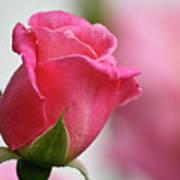 Pink Rosebud 3 Art Print