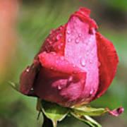 Pink Rosebud Art Print
