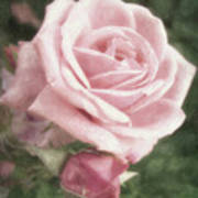 Pink Roses In Anzures 2 Nostalgic Art Print