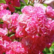 Pink Roses Summer Rose Garden Roses Giclee Art Prints Baslee Troutman Art Print