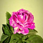 Pink Speckled Rose 1 Art Print