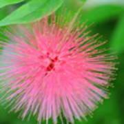 Pink Spikes Art Print