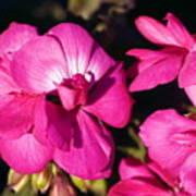 Pink Spring Florals Art Print