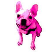Pink Terrier Art Print