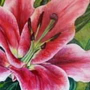 Pink Tiger Lily Art Print