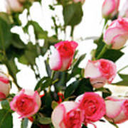 Pink Trimmed Roses Art Print