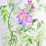 Pink Trumpet Vine Art Print