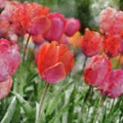 Pink Tulip Macro Art Print