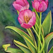 Pink Tulip Twist Art Print