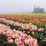 Pink Tulips And Tractor Art Print