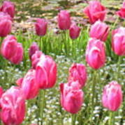 Pink Tulips By Peaceful Pond Art Print