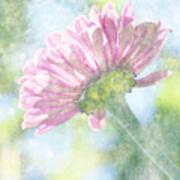 Pink Zinnia On Bokeh Background Art Print