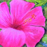 Pinkhawaii Hibiscus #505 Art Print