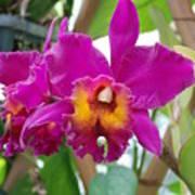Pinkishyellow Orchid Art Print