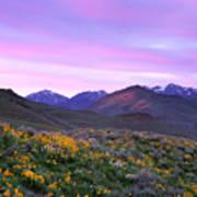 Pioneer Mountain Sunset Art Print