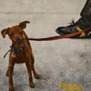 Pisa Puppy Art Print
