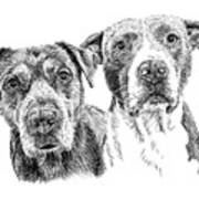 @pitbull.jack.and.miele Art Print