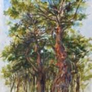 Pitch Pines, Cape Cod Art Print