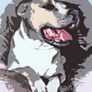 Pittbull Colors Art Print
