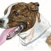Pittbull Dog Art Print
