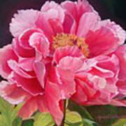 Pivoine Rose Art Print