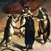 Plague: Dance Of The Rats Art Print