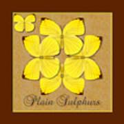 Plain Sulphur Butterfly Wheel Art Print