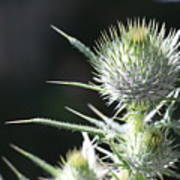 Plant 09-01-18 Art Print