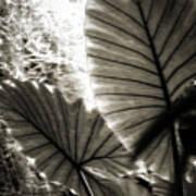 Plant 8661 Art Print