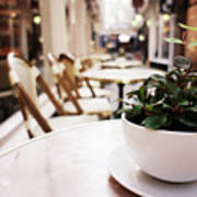 Plant In A Cup In A Cafe Art Print
