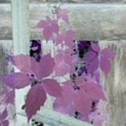 Plant In Negative Art Print