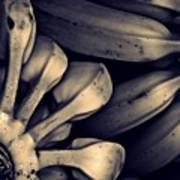 Plantains 1  Sepia Art Print