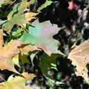 Planting Fields / Leaves Art Print